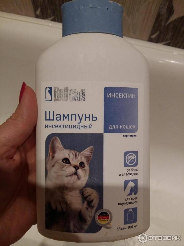 12 лучших шампуней для кошек и котов