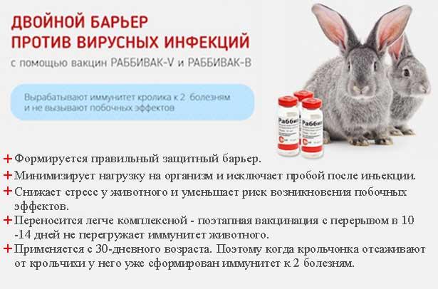 Болезни кроликов — основные виды, симптомы и лечение