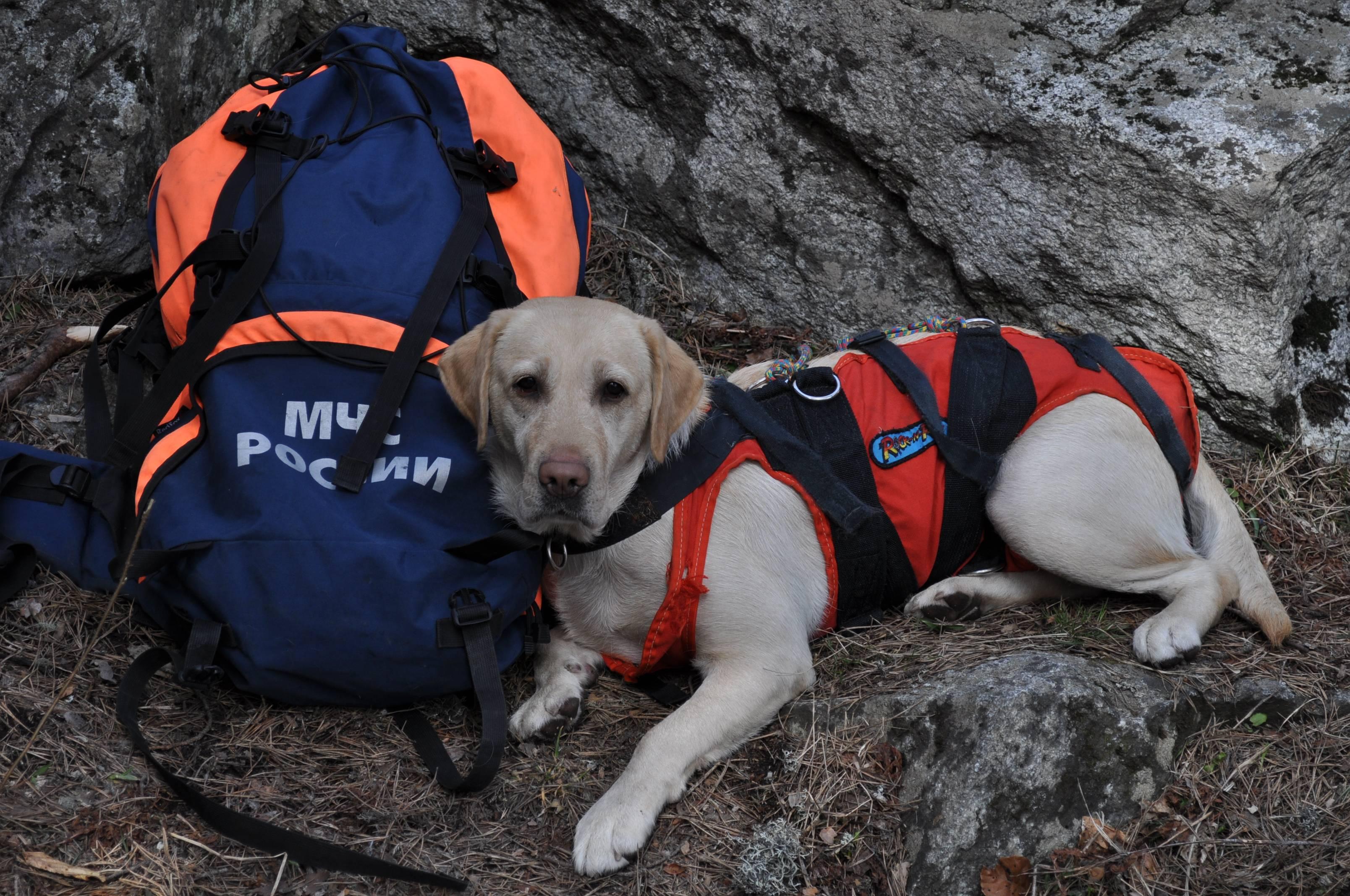 Обзор лучших собак спасателей, работающих в воде и горах: список пород