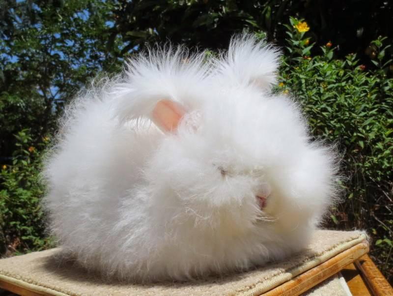 Декоративные кролики сколько живут. как долго живут декоративные кролики | дачная жизнь