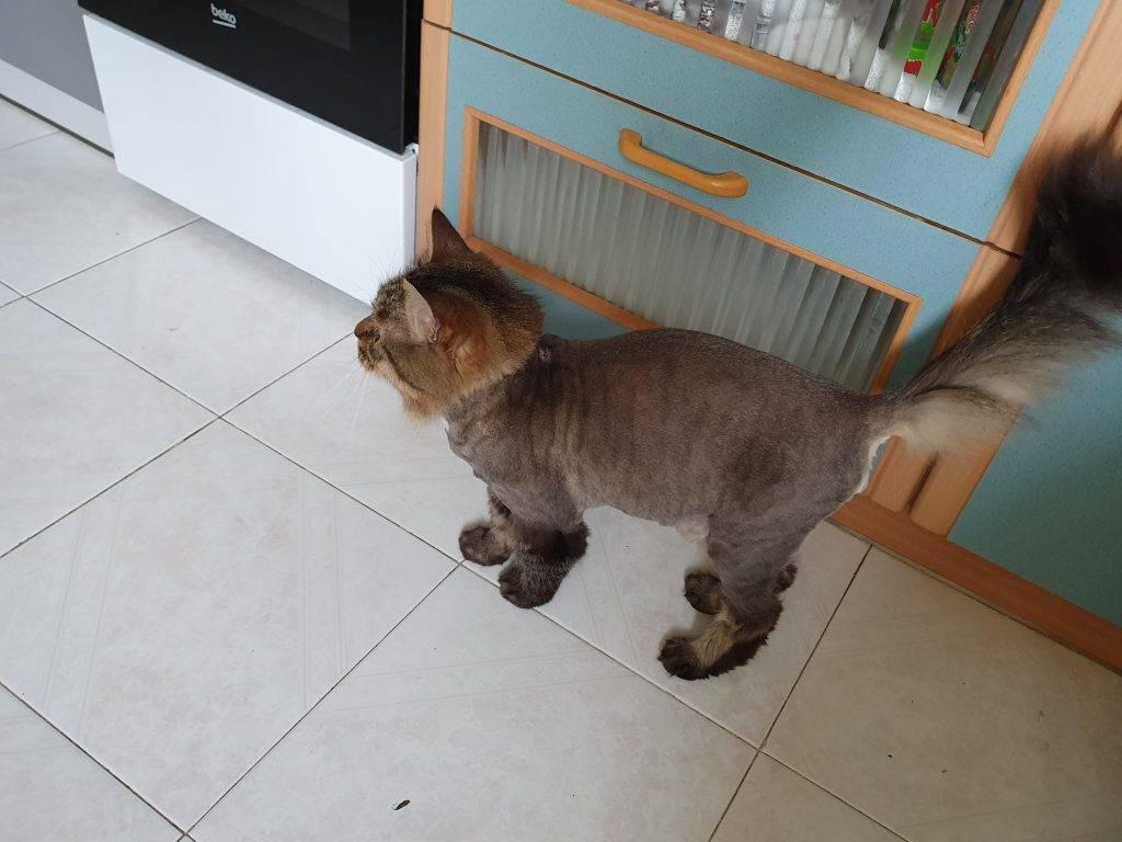 Стрижка (груминг) домашних кошек, за и против