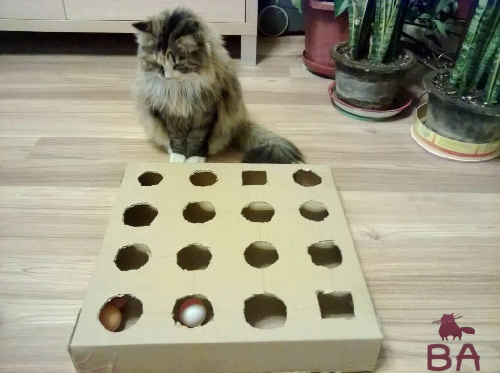 Почему нельзя играть и наказывать руками своего кота