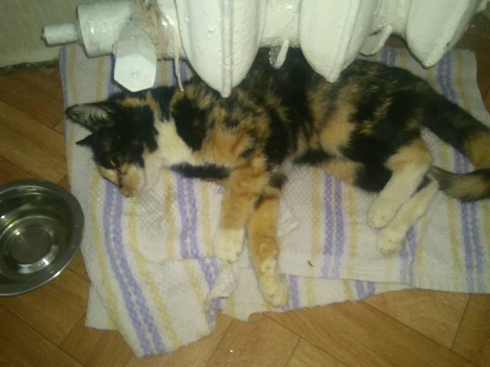 Как умирают кошки, как понять, что это происходит, почему они уходят из дома в этот момент