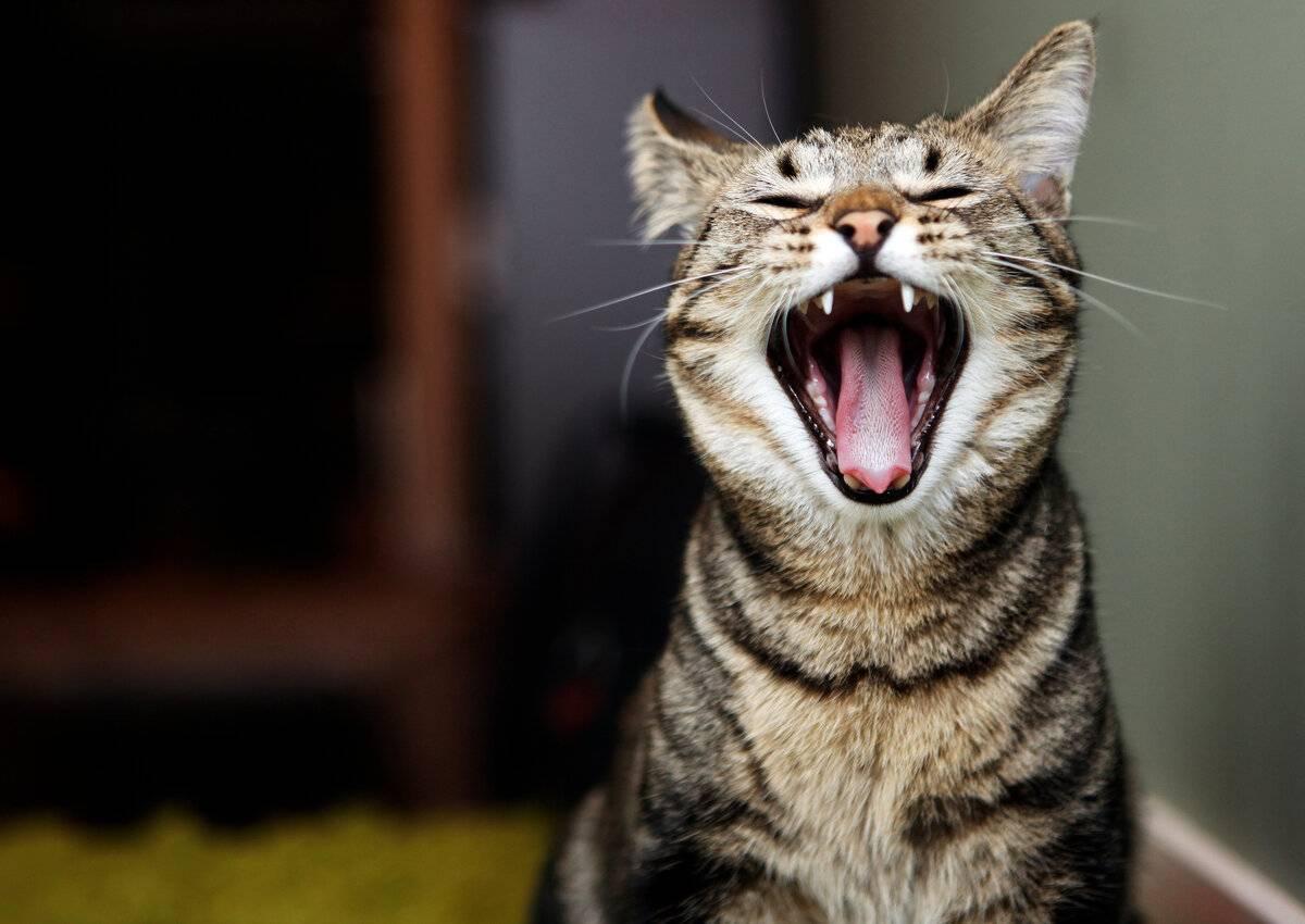 Как отучить кота орать: простые и эффективные методы