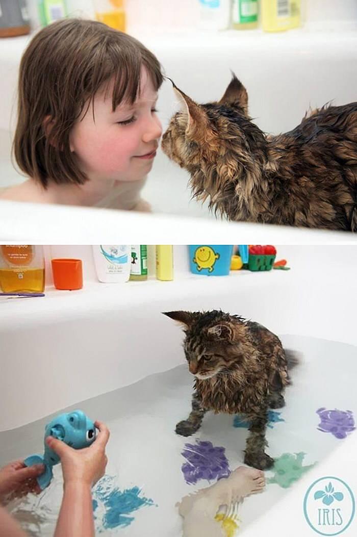 Породы кошек, которые любят воду — сайт эксперта по животным — howmeow