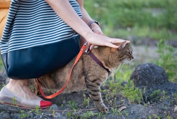 Закрытое содержание кошек или свободный выгул? | все о кошках