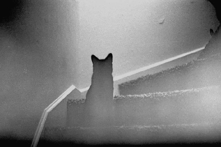 Приметы про умерших в доме кошек