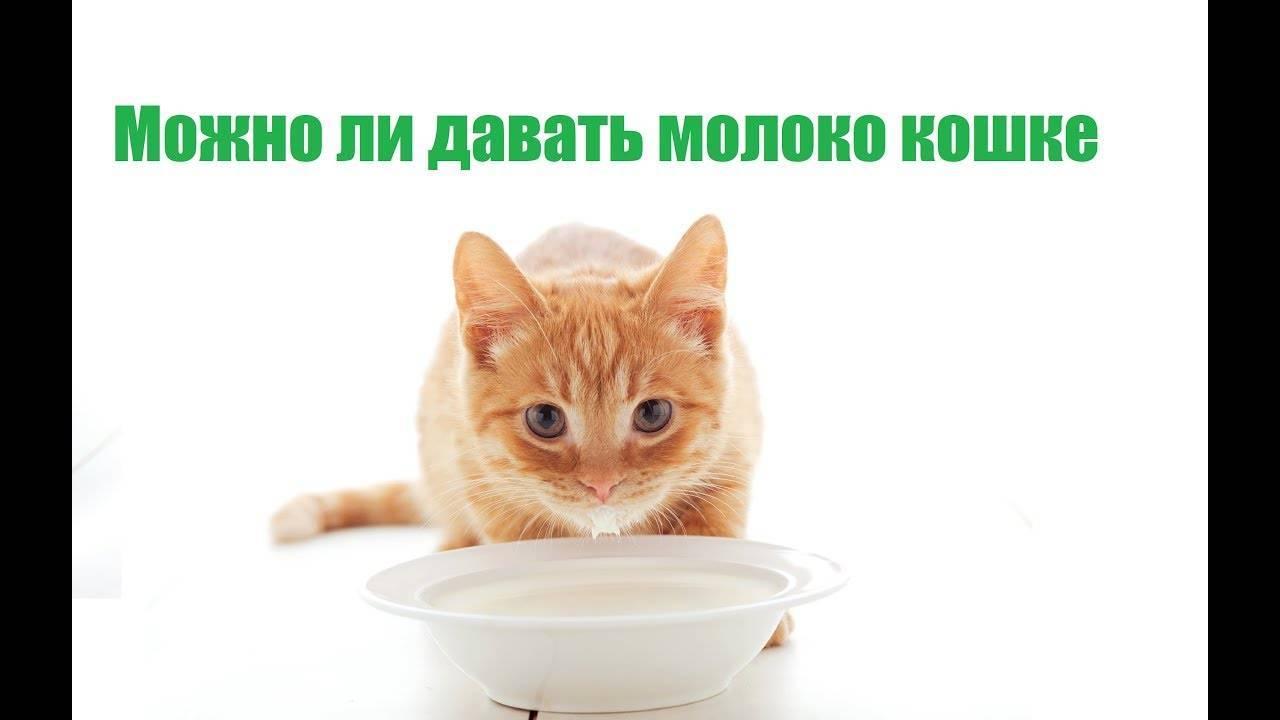 """Кормление кошек - сухой корм и натуральное питание. нормы правильного кормления кошки   нпк """"скифф"""""""