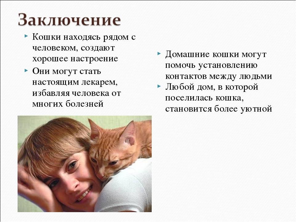 Почему кошки мурлыкают | лечебные способности и некоторые моменты поведения