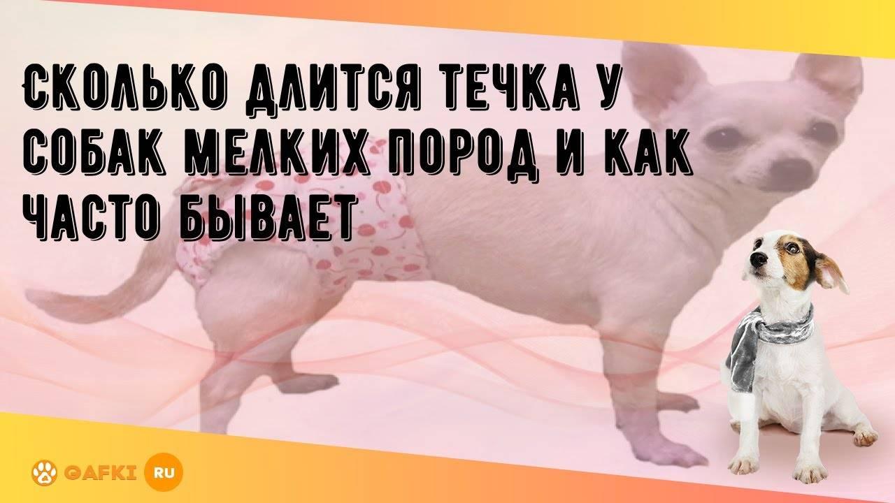 Сколько раз в год у собак бывает течка, периодичность и промежуток между течками