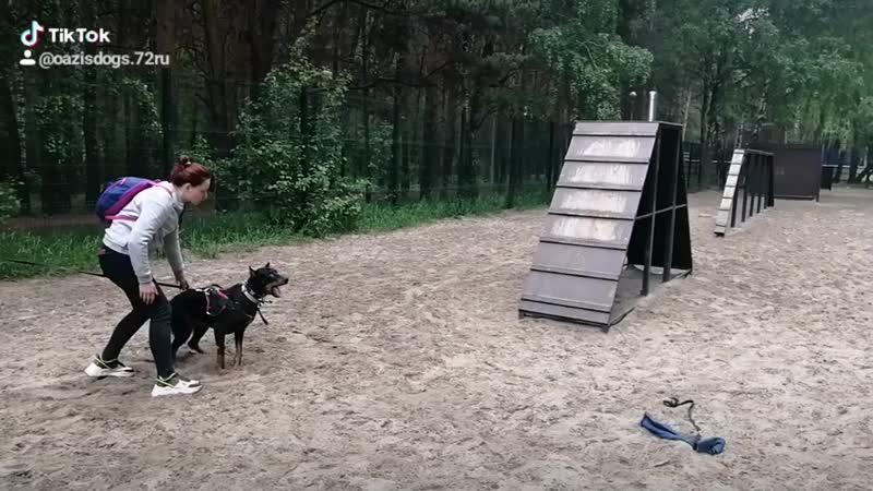 Для каких видов собак предназначен окд, как и где пройти экзамен