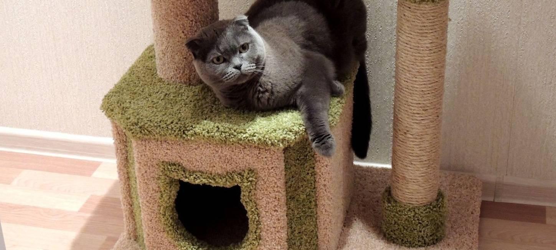 Разновидности и виды популярных моделей когтеточек, примеры как приучить котенка