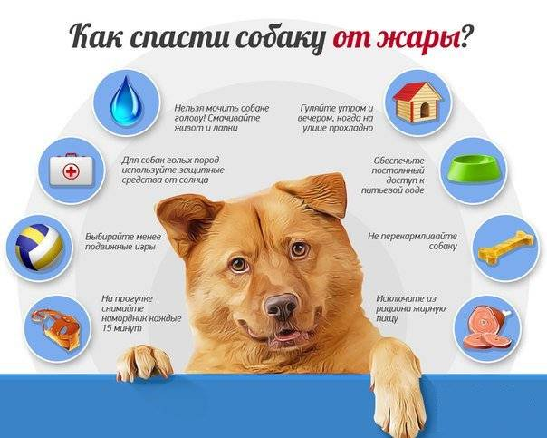 """Уход за шерстью собаки: средства и инструменты для груминга   блог ветклиники """"беланта"""""""
