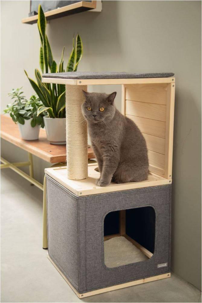 Несколько кошек в одном доме, или почему две или три кошки лучше, чем одна