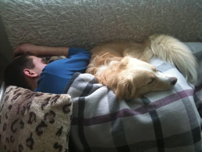 Можно ли брать собаку в постель: почему любят и почему нельзя спать