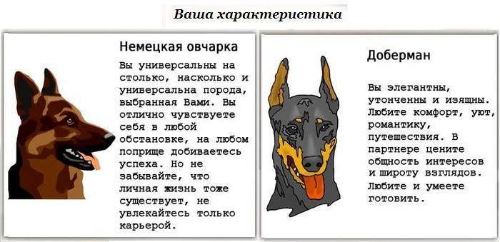 Немецкая овчарка – энциклопедия о собаках