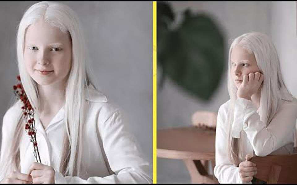 Доберман-альбинос: описание породы, характер, уход, содержание доберман-альбинос: описание породы, характер, уход, содержание