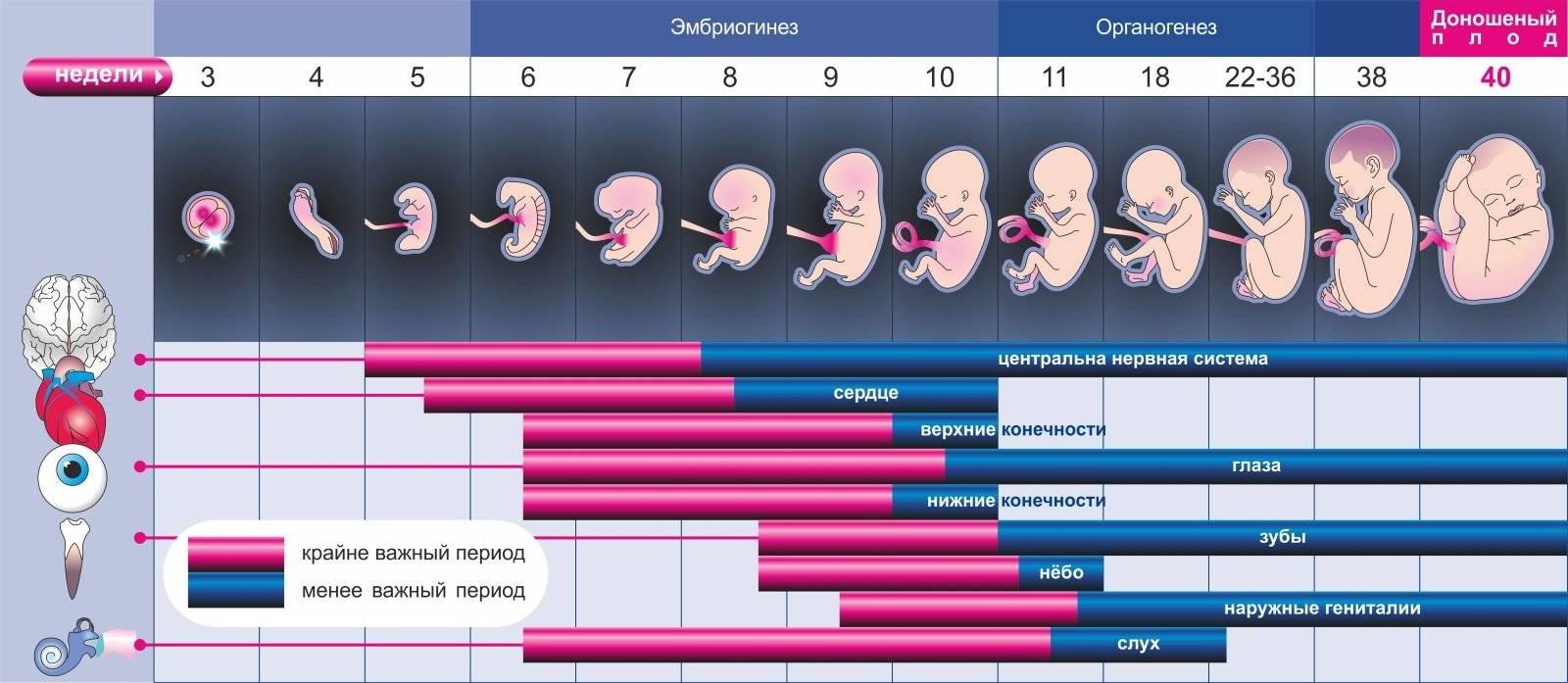 Беременность кошки: признаки, сроки, календарь родов, ложная беременность