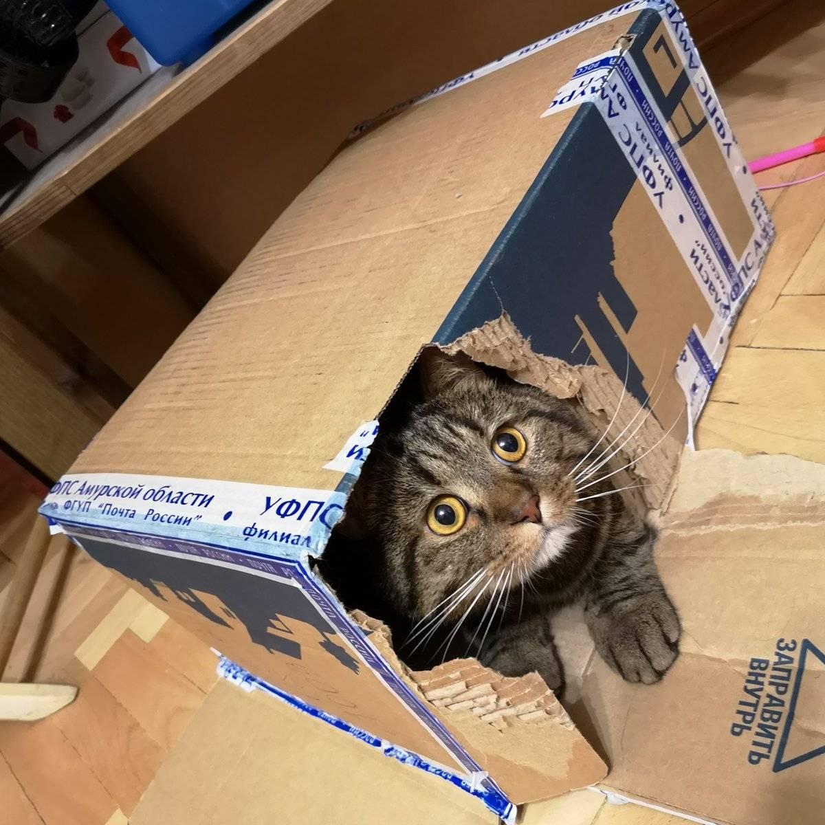 Почему кошки так любят коробки и пакеты
