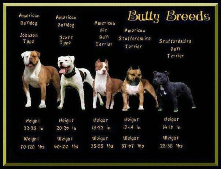 Американские клички для собак, красивые имена для щенков мальчиков и девочек.