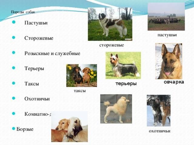 Существующие виды служебных собак, список пород