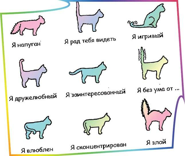 Если кошка поджимает хвост, то это явный признак проблемы. наблюдаем и выясняем причину