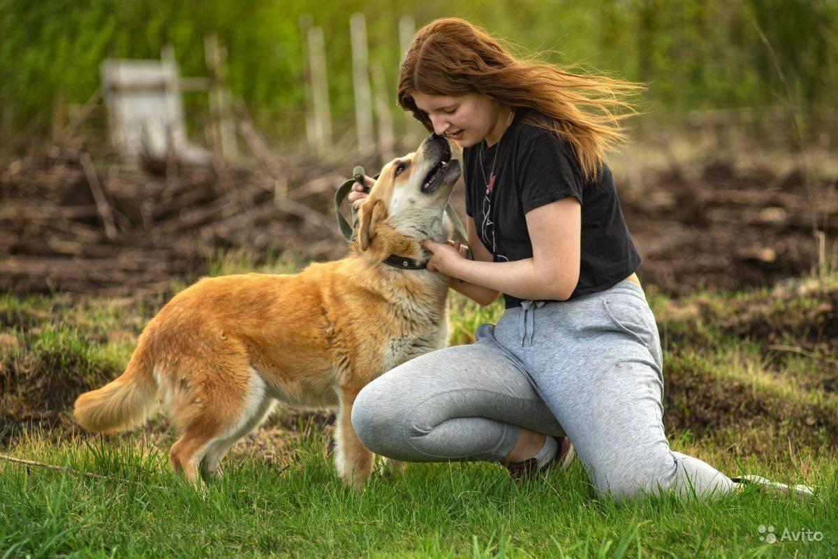 Собака-компаньон - обзор лучших компанейских собак