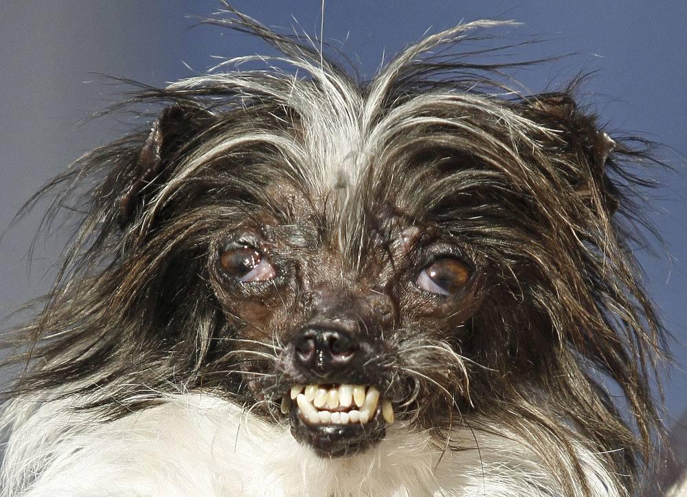 Смешные названия собачьих пород и их история
