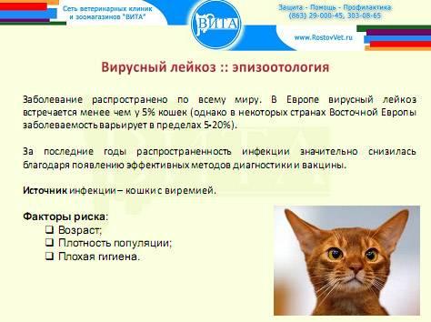 Лейкоз кошек (лейкемия, felv) вирусный