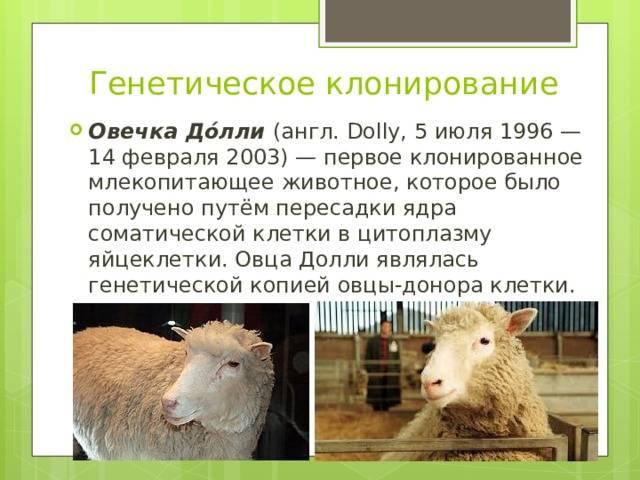 Возможно ли клонирование животных для мясного рынка?