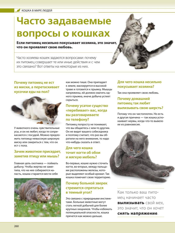 Правила, которые кошка должна усвоить с детства