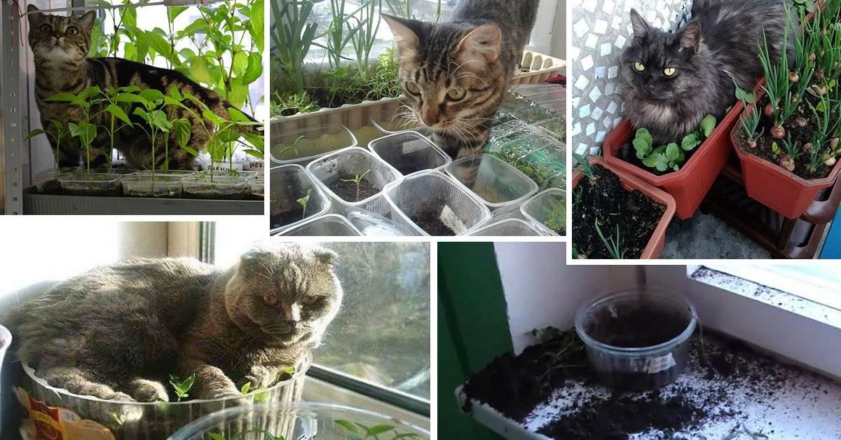 4 способа защитить рассаду от любопытных домашних кошек