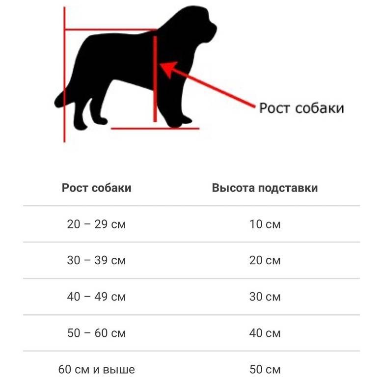 До какого возраста растут собаки до какого возраста растут собаки