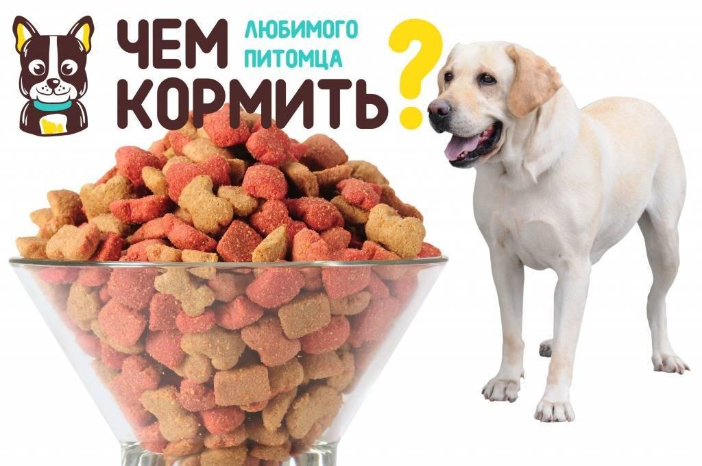 Чем кормить той-терьера: особенности питания при уходе в домашних условиях и содержании собак данной породы