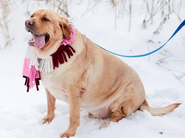 Как похудеть собаке? выход есть...