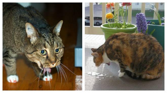 У кошки рвота с кровью