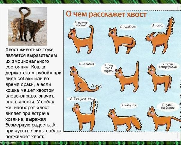 Как договориться со своей кошкой: учимся понимать жесты и язык мурлык