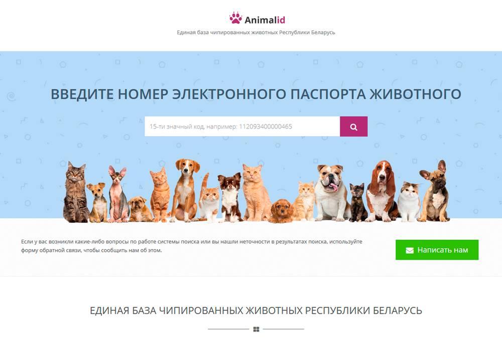 Клеймо у собак: как выглядит, что именно означает и как его делают