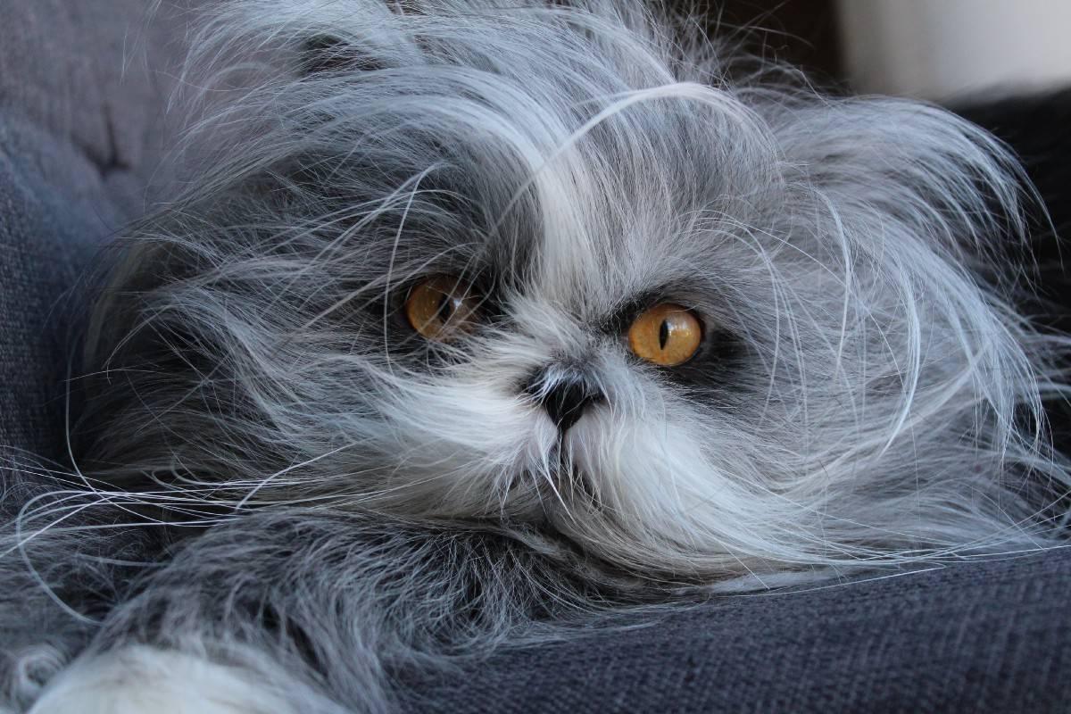 Породы кошек с коротким хвостом | как называется, фото, название