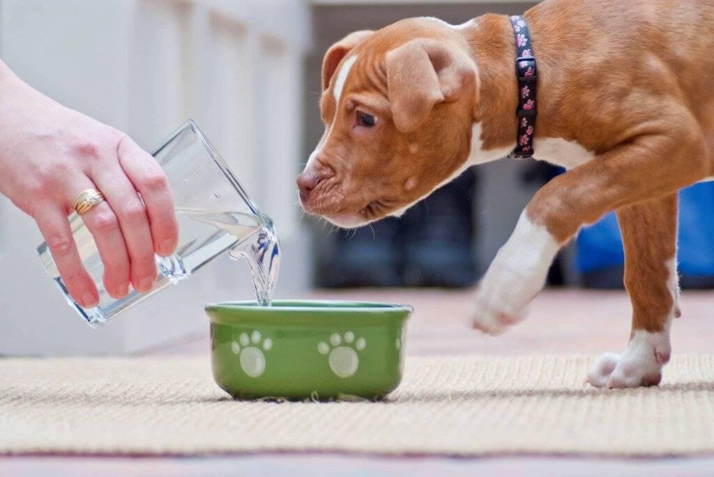 Собака много пьет воды – какие причины?