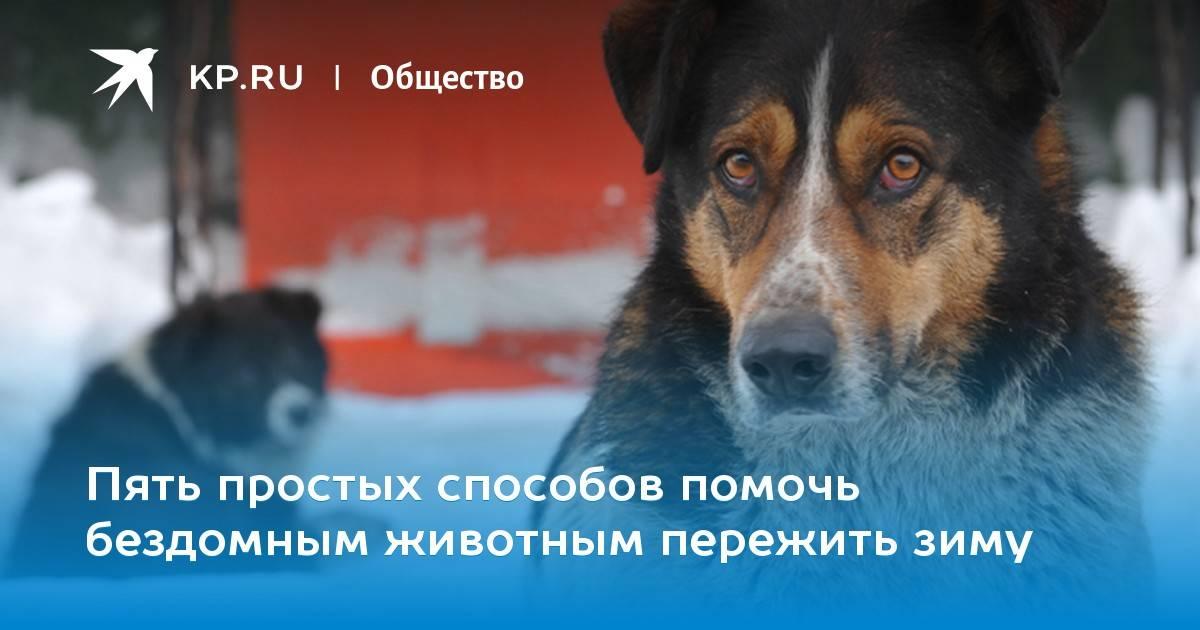 Сейчас собак не усыпляют. даже самые дикие собаки остаются жить | милосердие.ru