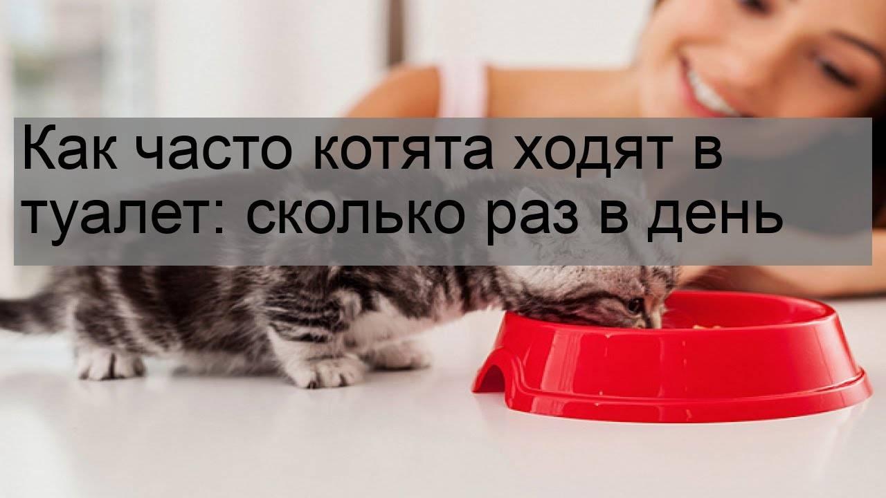 Сколько раз кошка должна ходить в туалет по-маленькому