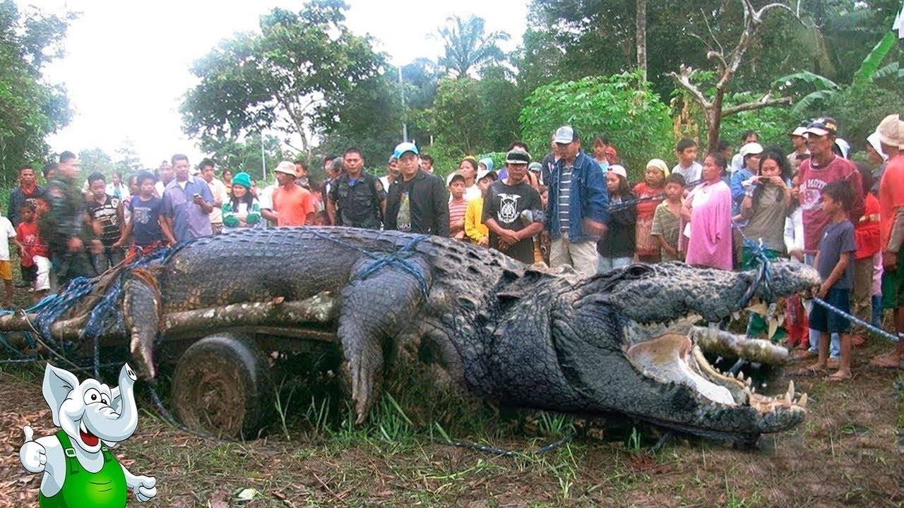 12 необычно больших животных, которые побили многие рекорды