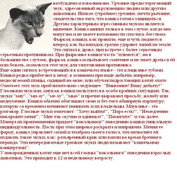 12 звуков, которые издает ваш котик, и что они означают » топчег.рф