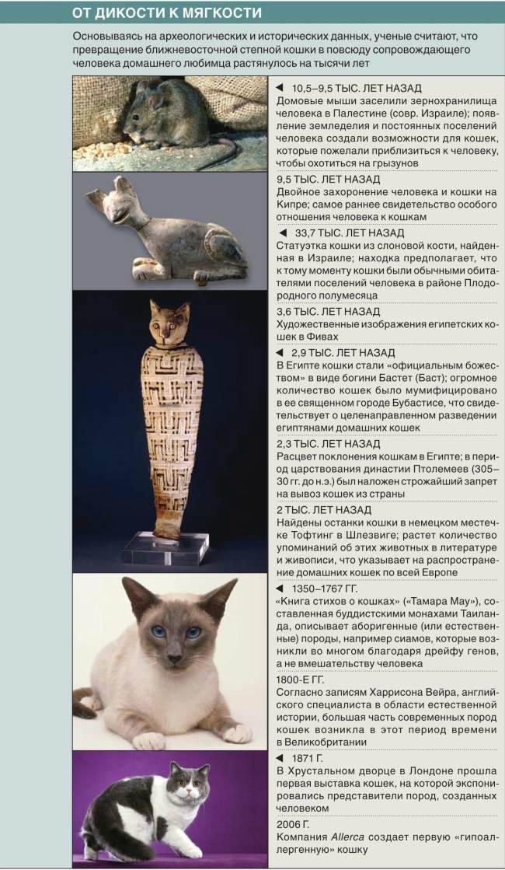 Как приучить котенка к рукам: быстрое приучение породистых и уличных питомцев