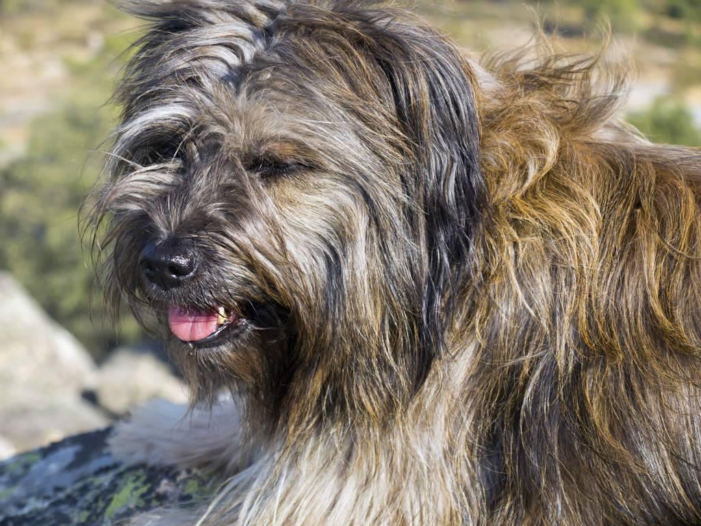 Прибыльные пальцы у собак - нужно ли избавляться от рудимента