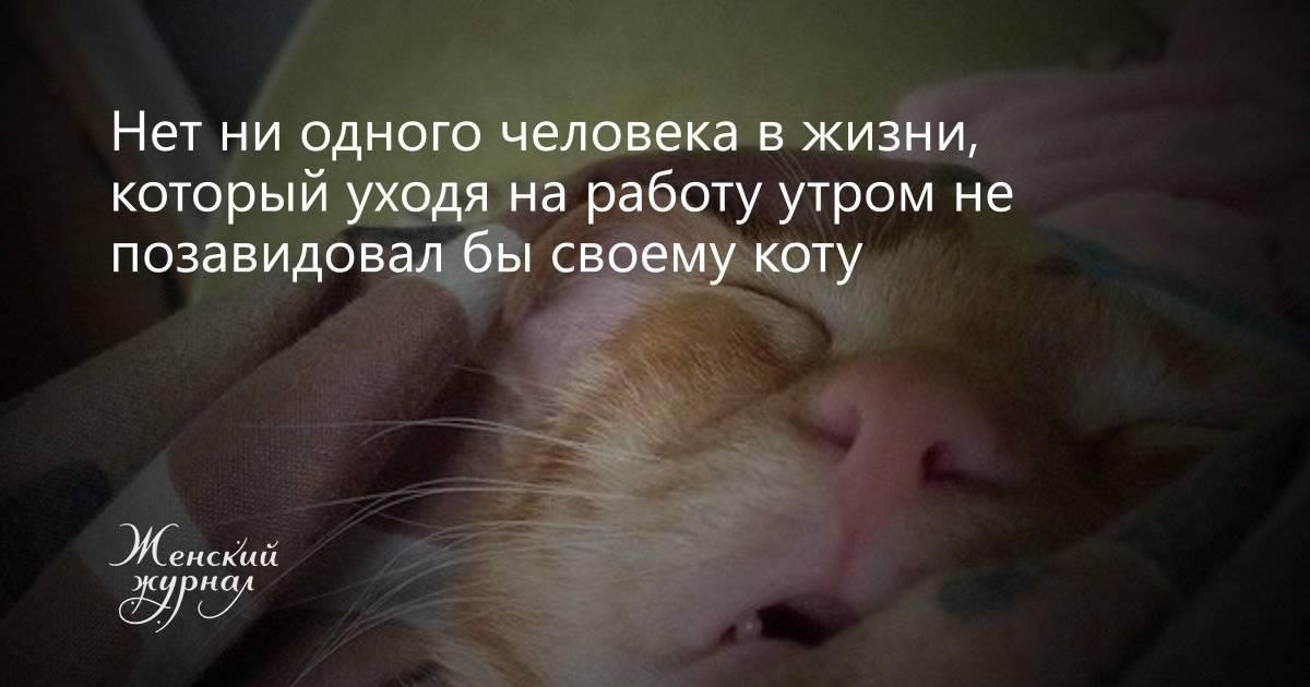 12 ошибок при покупке питомца, которые испортят жизнь обоим - gafki.ru