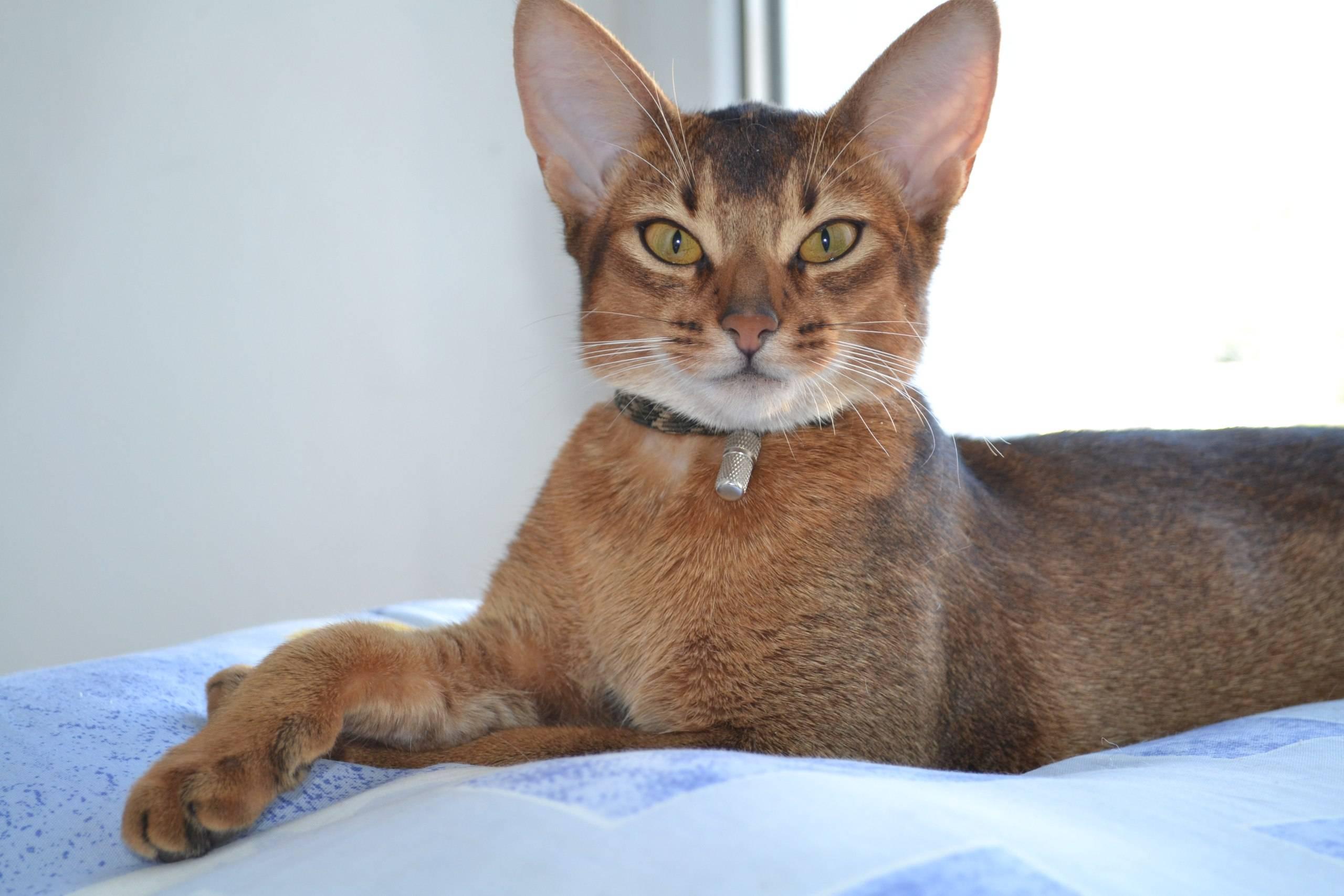 Самые ласковые и ручные породы кошек: список с фото, названиями и описанием пород
