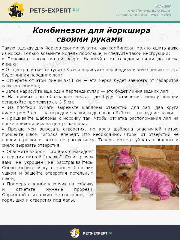 Чем кормить щенка йоркширского терьера – практичные советы - myyorks