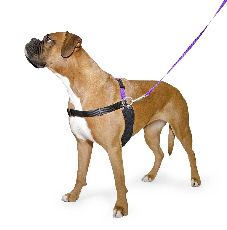 Шлейка для собак: виды, предназначение и как сделать своими руками
